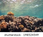 beautiful coral around an... | Shutterstock . vector #198524549