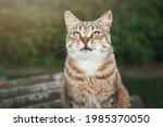 Portrait Of Striped Cat Resting ...