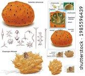 Zoology. Invertebrates ...