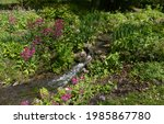 Small Stream Flowing Through A...