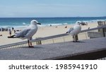 A Couple Of White Seagulls...