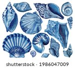 Set Of Blue Seashells   Conch ...