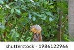 An Eastern Fox Squirrel On Top...