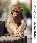 sitting monkey on swayambhunath ... | Shutterstock . vector #198620864
