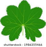 Green Leaf Of The Medicinal...
