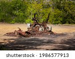 Burnt Out And Rusted Pieces Of...