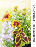 Small photo of colorful flowers with Coleus and blanketflower in garden