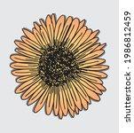sun shaped flower graphic... | Shutterstock .eps vector #1986812459