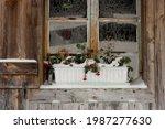 Frozen Geranium Flowers  Onset...