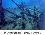 Wildlife At The Ship Wreck ...