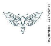 Outline Moth Drawing. Isolated...