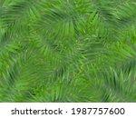 Background Green Leaves Kentia...