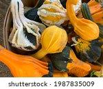 Gourds Basket Fall Season...