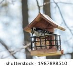 Downy Woodpecker Standing On...
