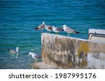 Group Of Seagulls On The Sea...