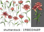set of different peonies and...   Shutterstock .eps vector #1988334689
