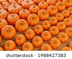Pumpkins Of Different Sizes Top ...