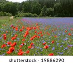 Spring Meadow With Wildflowers