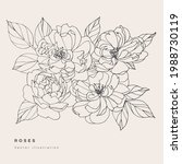 hand draw vector tea rose... | Shutterstock .eps vector #1988730119