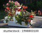 Flower Arrangement Of New...