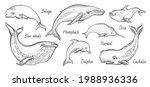 whale vector illustration set....   Shutterstock .eps vector #1988936336
