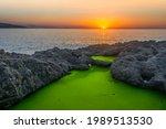 Green Algae Covered Rocks In A...