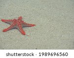 A Red Starfish In The Sand....