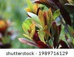 green leaf in tree garden    Shutterstock . vector #1989716129