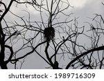 bird nest in dead leaf less tree   Shutterstock . vector #1989716309