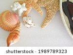 Decor Starfish  Seashells ...