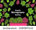 microgreens hand drawn vector... | Shutterstock .eps vector #1989895133