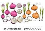 onion. whole  sliced vegetable. ... | Shutterstock .eps vector #1990097723