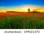 Field With Green Grass And Red...