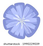 chicory. lilac blue sticker...   Shutterstock .eps vector #1990229039