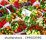 Tulip Flowers For Sale At A...