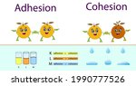 adhesion  cohesion for physics...   Shutterstock .eps vector #1990777526