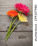 Three Colorful Gerbera Flowers...