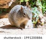 Squirrel In Yosemite In Usa