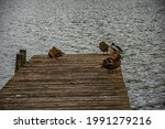 Ducks Siting On The Wooden...