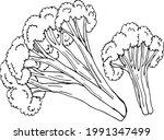 sketch cauliflower on white...   Shutterstock .eps vector #1991347499