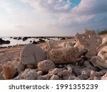 Death Corals On The Beach In...