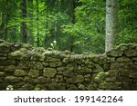 Wall Ruins In Forest