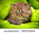 Stock photo british long hair kitten on a green background 199192043