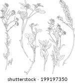set of line drawing herbs  wild ... | Shutterstock .eps vector #199197350
