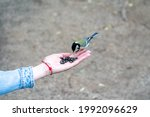 A Sparrow Pecks Seeds From The...