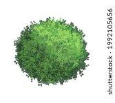 green bush. decorative bushes....   Shutterstock .eps vector #1992105656
