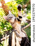 Adorable Tabby Cat Standing On...