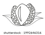 vector coloring illustration... | Shutterstock .eps vector #1992646316