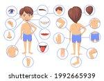 human body parts cartoon vector ... | Shutterstock .eps vector #1992665939