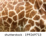 Genuine Leather Skin Of Giraffe ...